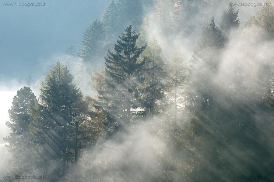 alberie nebbia in alto adige